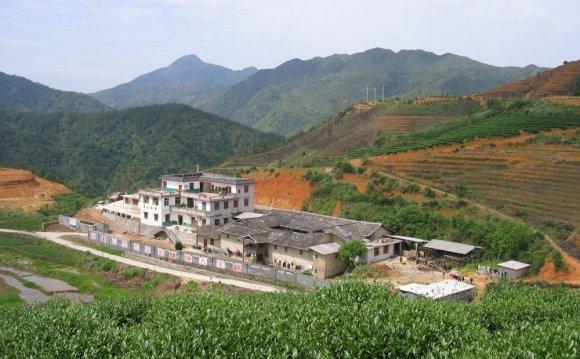 Mingshan Eco-friendly Tea Farm